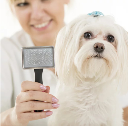 Good Form Grooming - Toilettage et tonte d'animaux domestiques
