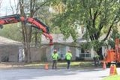 Campbell Tree Experts Inc - Tree Service - 613-594-4891