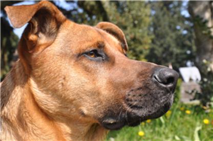 Del Norte Kennels - Pet Care Services - 250-390-3289