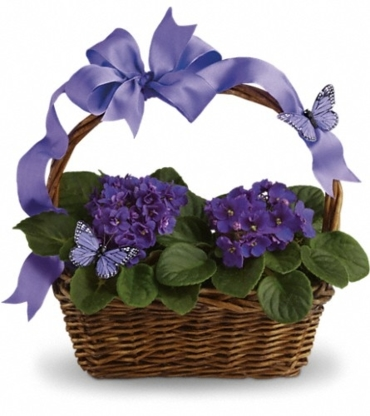 Petitpaw Designs Florist - Florists & Flower Shops - 902-719-5517