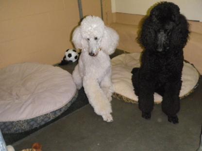 Fortune Creek Kennels - Pet Care Services