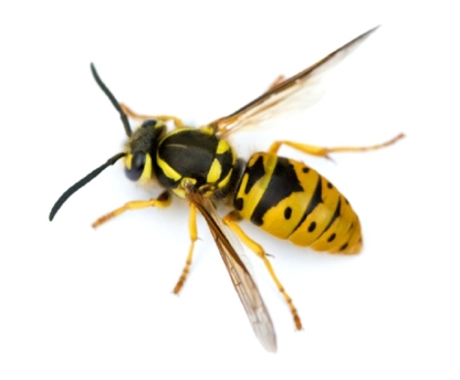 Bugbusters - Pest Control Services - 514-581-4456