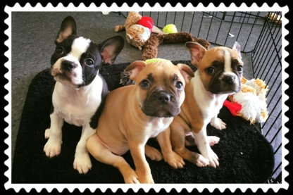 Wiggles & Wags - Animaleries