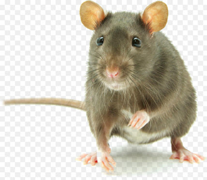 AAA Pest Control - Pest Control Services