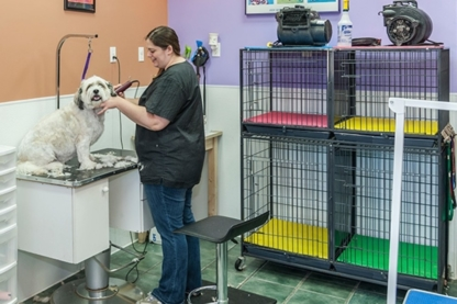 Dogs Rule Pet Grooming - Toilettage et tonte d'animaux domestiques - 403-217-9119