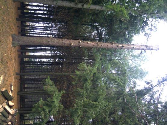 Joe's Tree Service - Tree Service - 519-940-0804