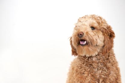 Clinique Vétérinaire DIX30 - Vétérinaires - 450-812-8483