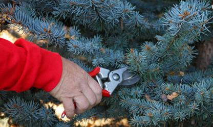 Ladybug Arborists - Service d'entretien d'arbres - 403-634-3062