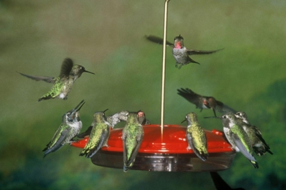 Backyard Bird Centre - Nichoirs et mangeoires à oiseaux - 778-216-9645
