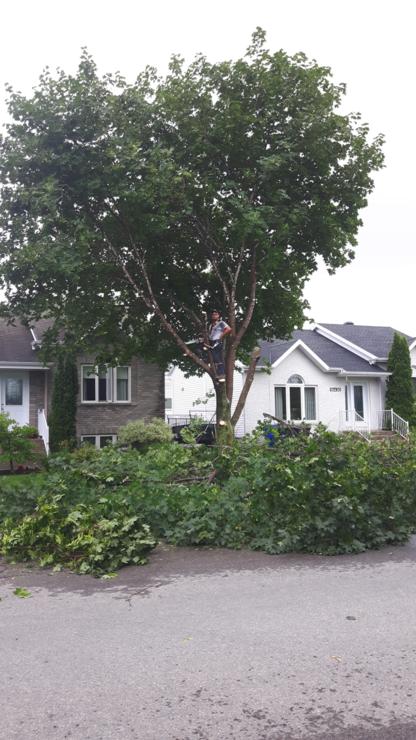 Émondage Gravel Pruning - Tree Service - 514-712-7918