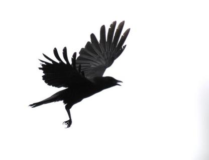 Black Bird Arborist - Tree Service - 587-894-4847