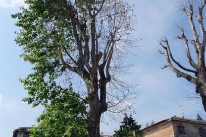 Emondage Gatineau - Tree Service