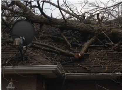 Clear Cut Tree Service - 289-716-0259