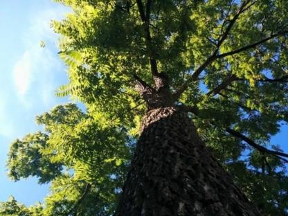 Lotus Tree Care - Tree Service - 705-828-6711