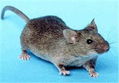 Coastal Pest Management - Pest Control Products