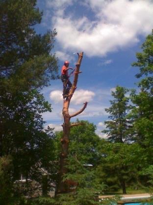 Owen's Tree & Shrub Care - Tree Service - 905-838-4795