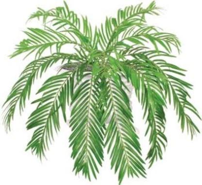 Permaplants - Grossistes et fabricants de fleurs et de plantes artificielles - 514-523-3530