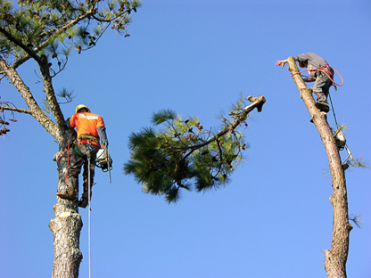 Access Tree Co - Tree Service - 905-831-7055