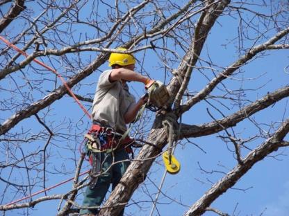 Timbersmith Tree Service - Tree Consultants - 289-971-6457