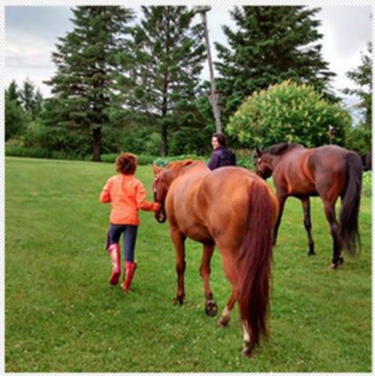 Willow Creek Horsemanship Center - Horse Riding Centres - 613-899-2238