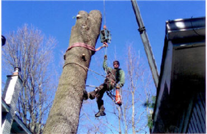 AAA Tree Service - Firewood Suppliers - 705-645-2154