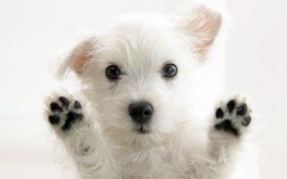 Mary's Doggie Daycare - Services pour animaux de compagnie - 250-309-2745