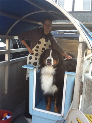 Dip Dip Mobile Doggie Wash - Pet Grooming, Clipping & Washing - 778-878-9045