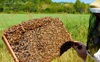 Miel des Grands Jardins - Farms & Ranches - 418-633-2209