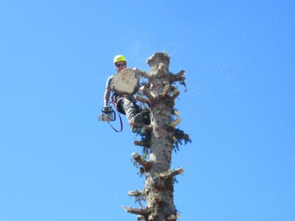 Royal Dutch Tree Services - Tree Service - 403-462-9262