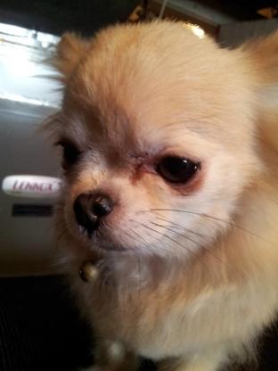 Lisa's Dog Grooming - Pet Grooming, Clipping & Washing - 519-803-5168