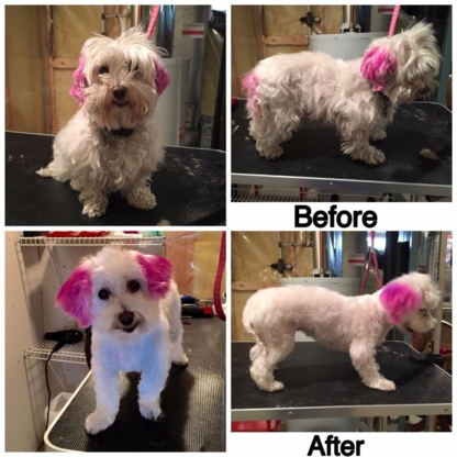 Tail-Rific Dog Grooming - Pet Grooming, Clipping & Washing - 403-401-2938