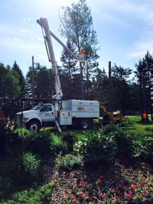 Dagenais Tree Service Limited - Tree Service - 613-732-2426