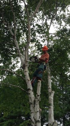 O'Brien Tree Service - Tree Service - 705-741-9925