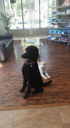 Dk's Pet Grooming Ltd - Pet Care Services