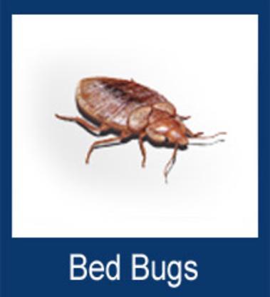Adams Pest Control - Pest Control Products - 902-220-4003
