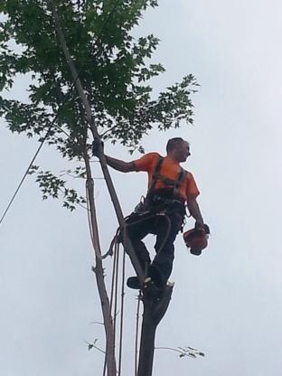 Émondage Mario Béland - Service d'entretien d'arbres