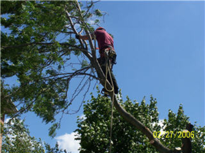 Beechwood Tree Co - Tree Service - 905-874-7865