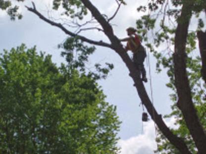 A C E Tree Care - Tree Service - 905-269-8733