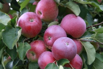 Verger Rouge Pomme Inc - Producteurs et distributeurs de fruits et légumes - 450-469-2029