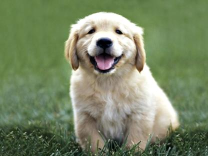Snoopy's Pet Care - Pet Sitting Service - 519-418-8008