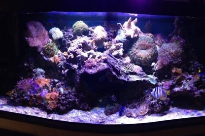 Aquarium Art - Aquariums & Supplies