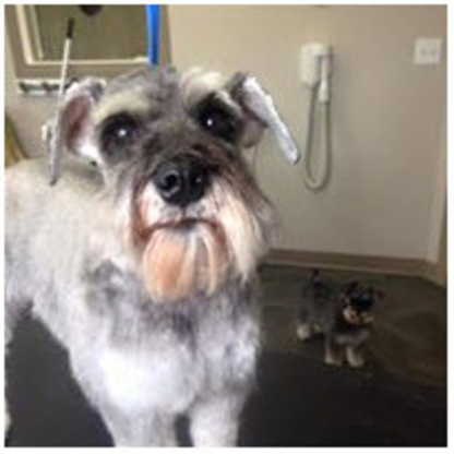 Grooming By Kate - Pet Grooming, Clipping & Washing - 587-876-4028