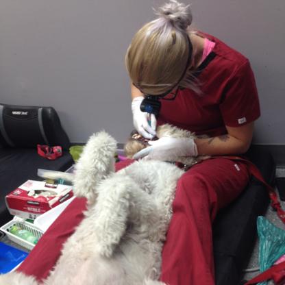 K9 Gentle Dental - Toilettage et tonte d'animaux domestiques