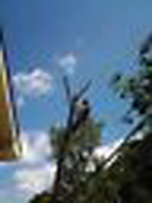Undercutters Tree Care - Tree Service - 519-242-4378