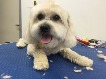 Ciao Bella! Pet Parlour - Pet Grooming, Clipping & Washing