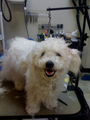 Pampered Pets Grooming & Care - Pet Grooming, Clipping & Washing - 604-591-5020