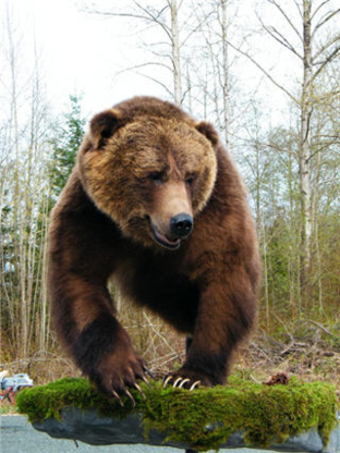Artistic Wildlife Creations Inc - Taxidermists