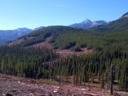 East-West Environmental Services Inc. - Forestry Consultants