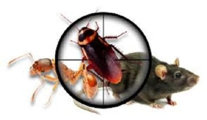 Canadian Pest Solutions - Pest Control Services - 226-773-3380
