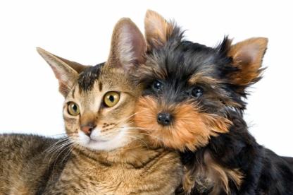 Luxurious Pet Spa - Toilettage et tonte d'animaux domestiques - 905-230-4834